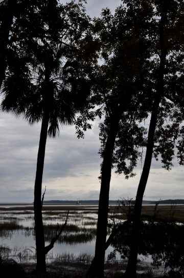 Palmetto trees and marsh